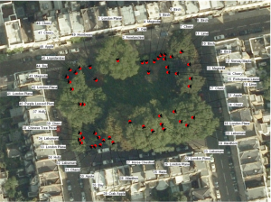 Montpelier Square Trees 2012